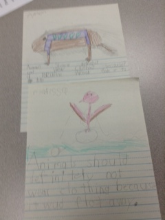grade1-animals-should-definately-not-wear-clothing-17tpr5z
